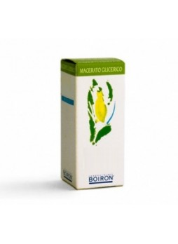 BOIRON ABIES PECTINATA MACERATO GLICERICO  60ML